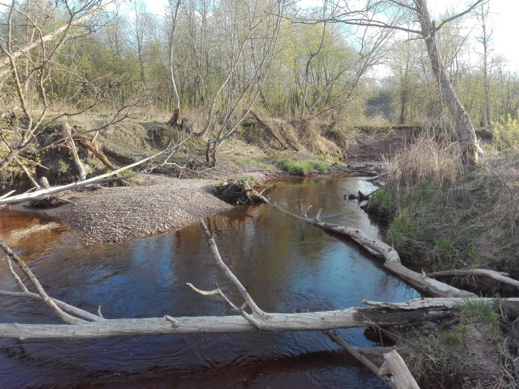 Upelės vaga paplauna medžius