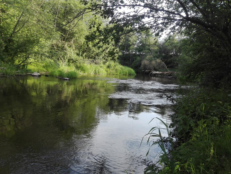 Upė įdienojus