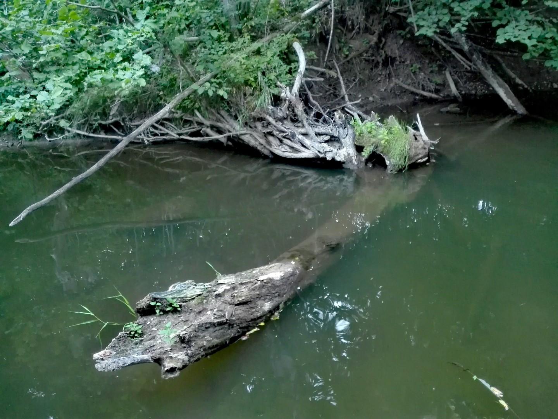 Čia prie kelmo gyveno didesnis upės gyventojas kuris neužkibo