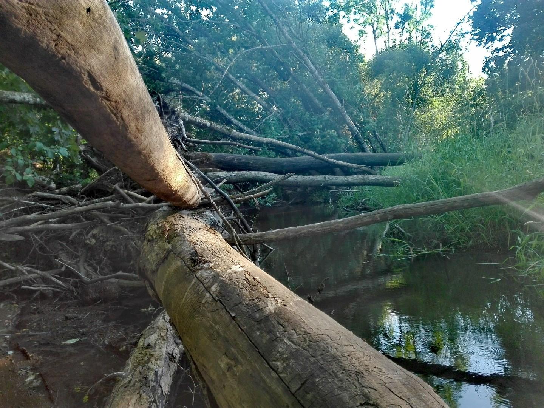 Upė ir įvirtę medžiai